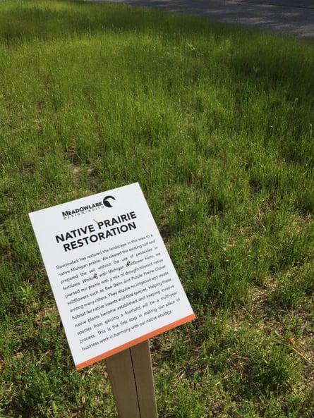 Meadowlark's Native Prairie Grass year one